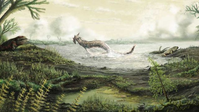 Scottish fossils tell story of first life on land