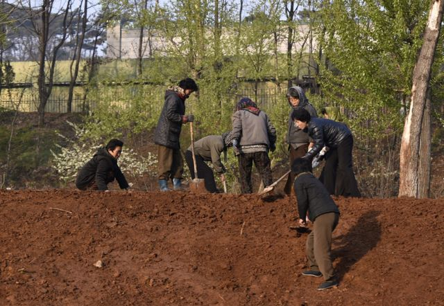 Norcoreanas trabajando
