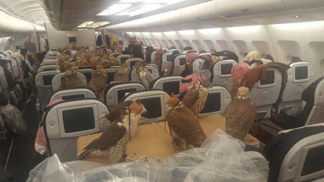 التقطت صورة عام 2017 تظهر عشرات الطيور الجارحة، في رحلة إلى المملكة العربية السعودية.