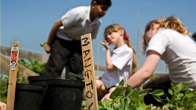 Niños en una hortaliza