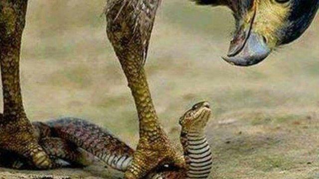 """L'agence anticorruption du Nigeria, amusée par ce fait divers, estime qu'""""il ne pas y avoir de pitié envers le serpent qui a avalé l'argent."""""""