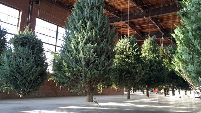 Christmas trees suspended from ceiling