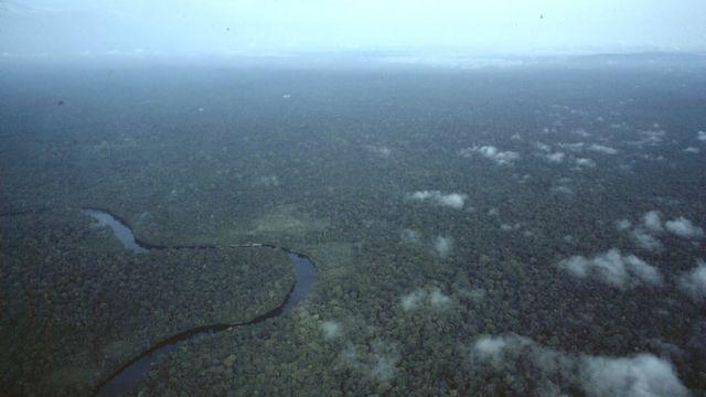 Floresta amazônica vista de cima
