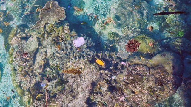 พลาสติกลอยอยู่เหนือแนวปะการัง