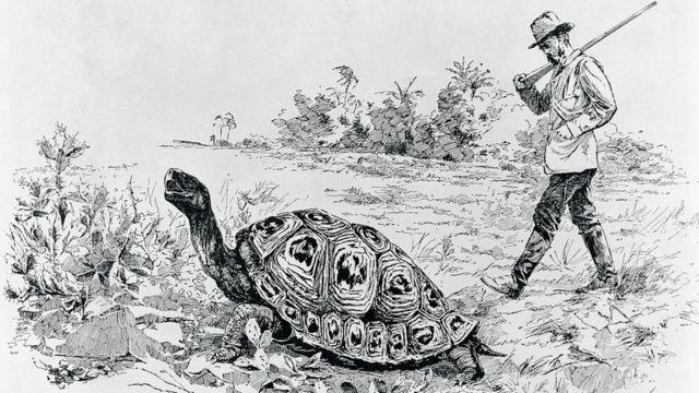 Charles Darwin midiendo la velocidad con que camina una tortuga gigante.