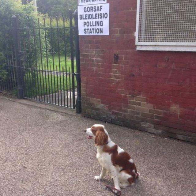 Dog outside polling station