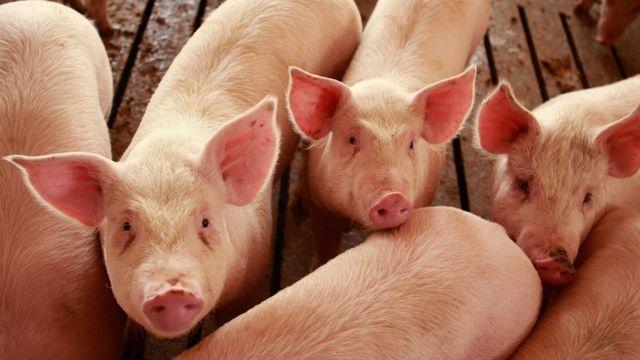 中国は米国産豚肉など米国からの輸入品に報復関税を課した