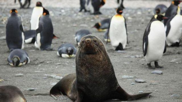 Durwan teku ''Seals'' da tsuntsayen Penguins a bakin teku