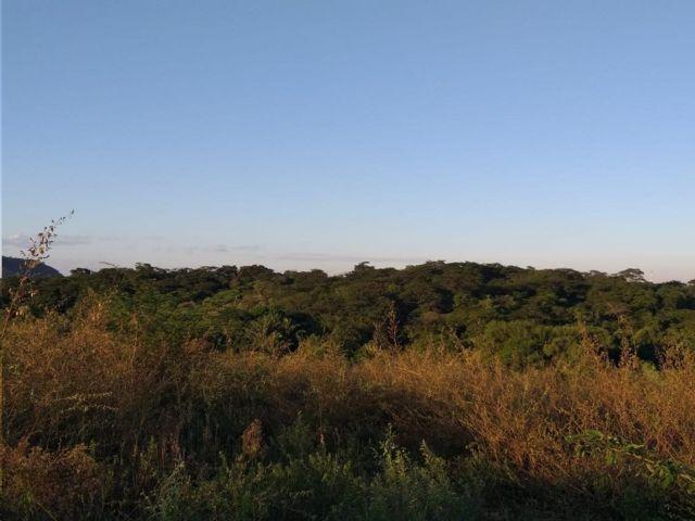 Floresta do Camboatá