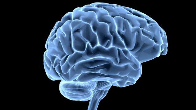 Человеческий мозг: размер - это не главное?