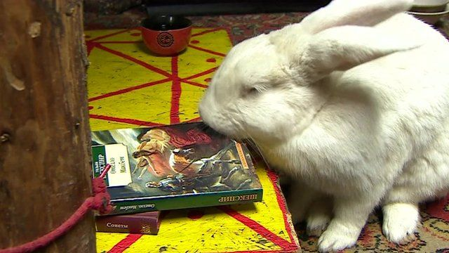 Bunny and a book
