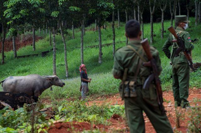 ထိုင်းနဲ့မြန်မာ နယ်စပ်က ရော်ဘာစိုက်ခင်း တစ်ခု