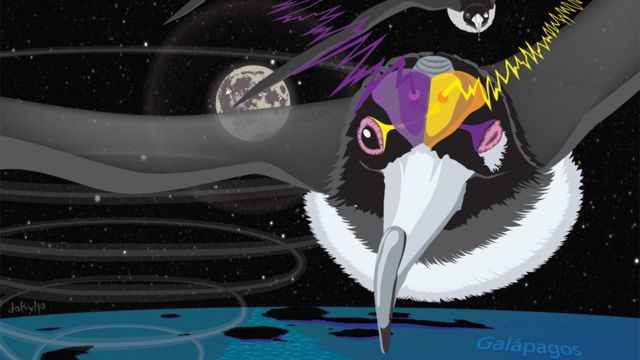 Ilustración de fragatas volando durante la noche