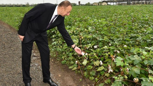Президент Илҳом Алиев Собиробод туманидаги пахта даласида