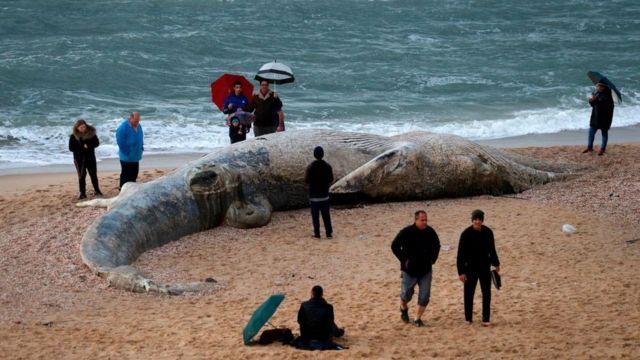 Туша кита, выброшенная на берег
