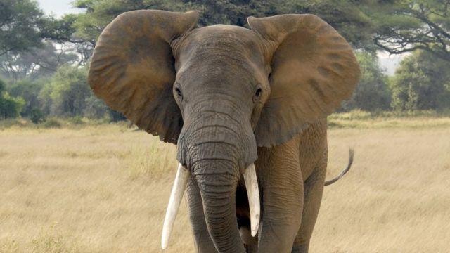 象 死 ボツワナ 大量