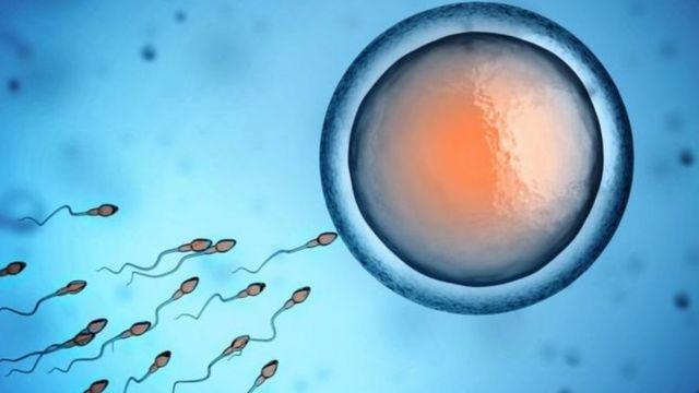 पुरुष शुक्राणु