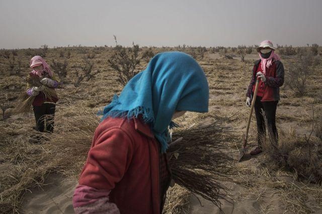 中国当局从二十多年前开始推行防沙治沙和退耕还林等多个工程。