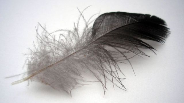 Una pluma