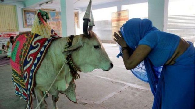 ভারতে গরুকে পুজা করেন হিন্দু ধর্মাবলম্বীরা