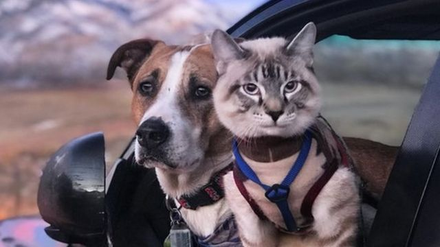 Dog and cat staring outside of a car, with lilac sky visible