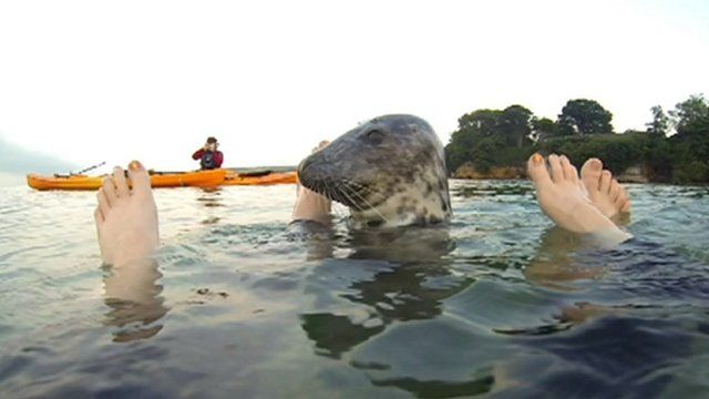 The seal swam between their feet and appeared to wrap its fins around their legs