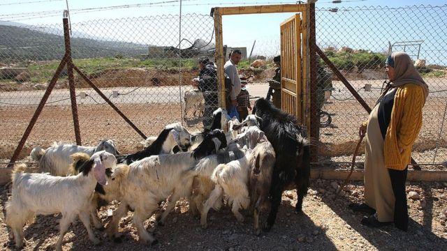 Puerta de acceso para el ganado