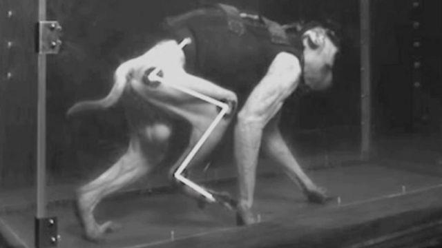 القرد على آلة المشي