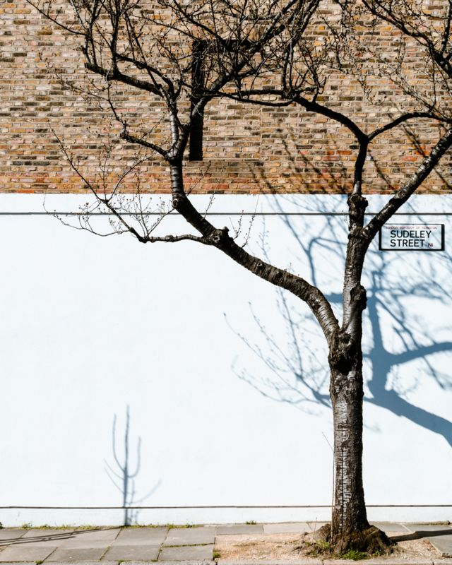 Tree casting a shadow on the side of a building with a single blocked window, on Sudeley Street, London
