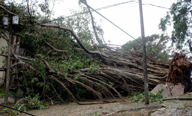 Un árbol desarraigado por la fuerza del huracán Irma en La Habana