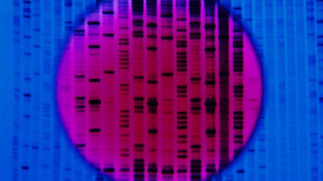 Bases de ADN