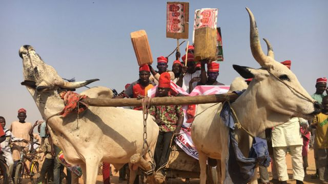Supporters of Rabiu Kwankwaso, wearing red hats, on a cattle campaign cart in Kano state, Nigeria