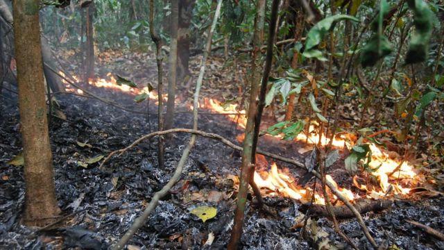 Um incêndio florestal durante o El Niño de 2015