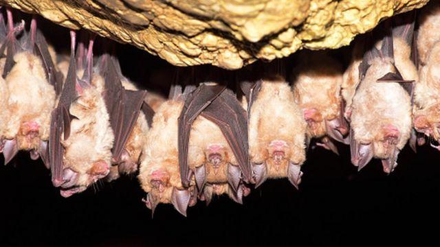 Чтобы впадать в спячку, древним людям не нужно было виснуть в своих пещерах вниз головой