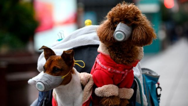 Dogs wearing masks are seen in a stroller in Shanghai