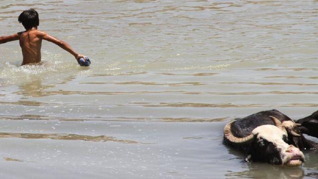 رها سازی آب سد کرخه در دشت آزادگان