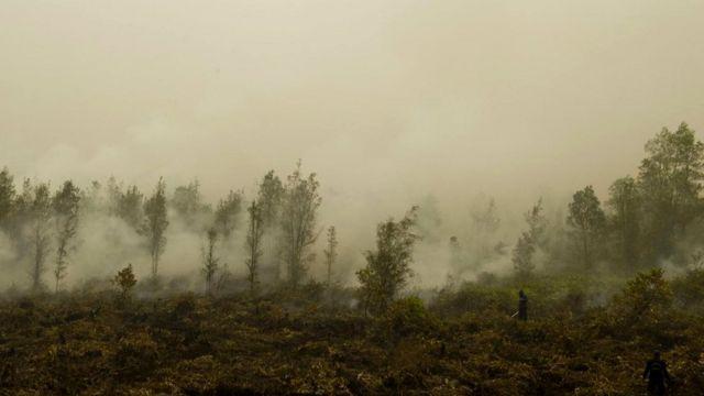 Определенные методы ведения сельского хозяйства добавляют загрязнения воздуху, и от этого в сельской местности порой умирает больше людей, чем в городе.