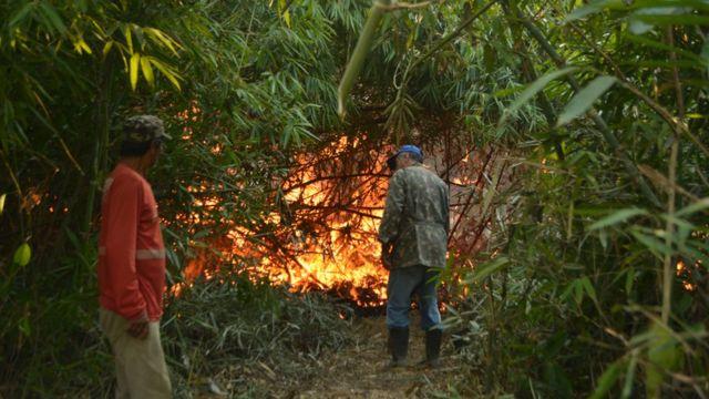 Incêndio na área dominada por bambus