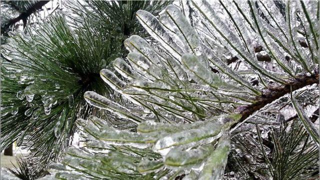 Иголки во льду