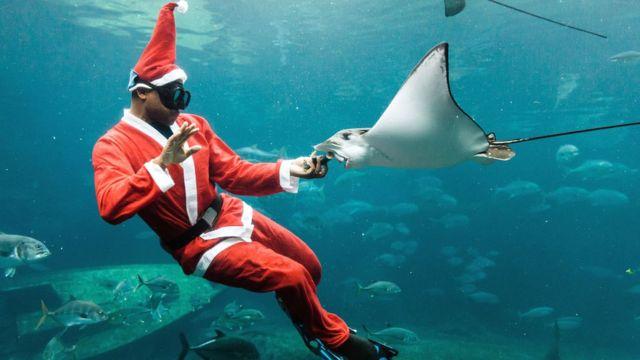 En Afrique du Sud, juste avant Noël, un homme habillé en Père Noël dans l'aquarium pendant un spectacle avant Noël à uShaka Sea World, à Durban, le 5e plus grand aquarium au monde et le plus grand d'Afrique.