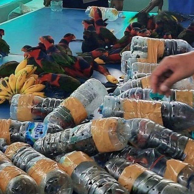 طوطے بوتل