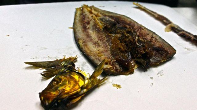feseekh 醃製魚