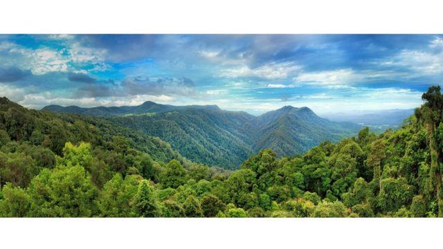 Cuando el supercontinente de Gondwana se rompió, los fragmentos se dispersaron por todo el mundo. Muchas de sus plantas antiguas todavía viven en el bosque de Dorrigo australiano.