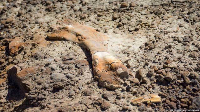 12-річний хлопчик знайшов скелет динозавра. Йому 69 млн років
