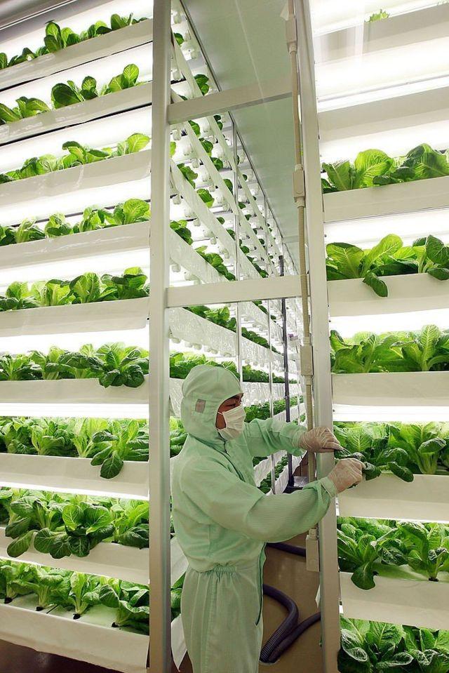 Un cultivo vertical en Japón
