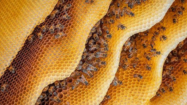 abelha em uma colmeia