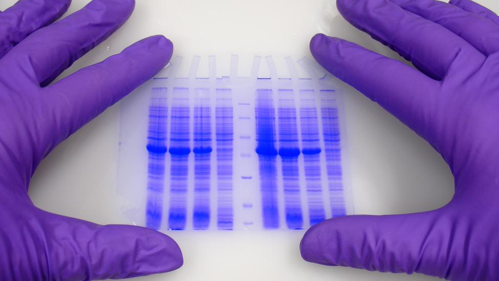 руки на ДНК