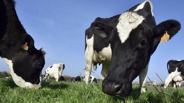 Sản phẩm sữa là một trong những mặt hàng xuất khẩu lớn nhất của EU sang Nhật