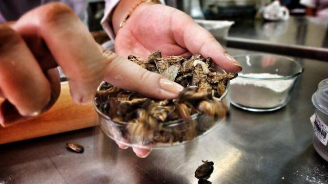 Kecoa udang kering.