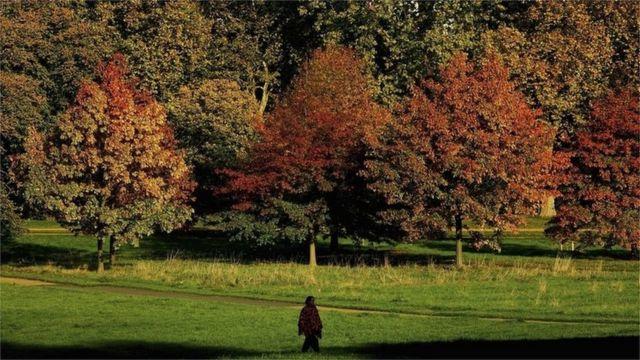 شخص يتنزه في حديقة هايد بارك في لندن